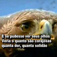 Poema Lição Das Águias